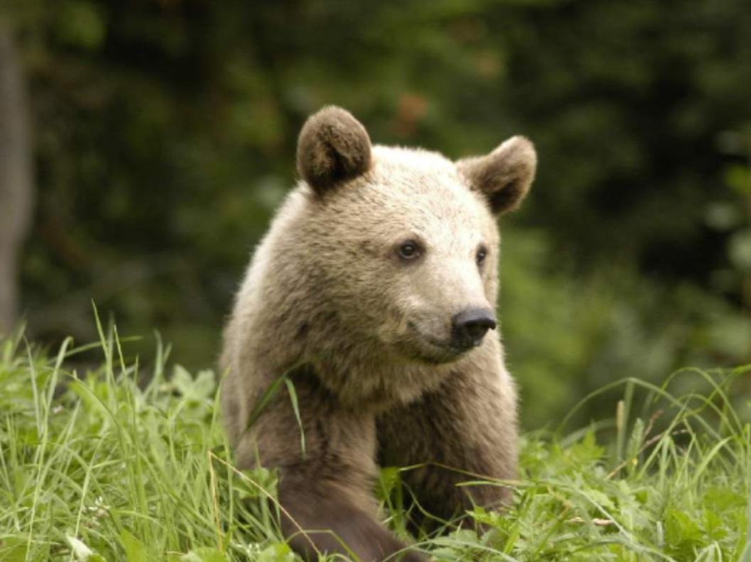 Právě vyšel zpravodaj s medvědem