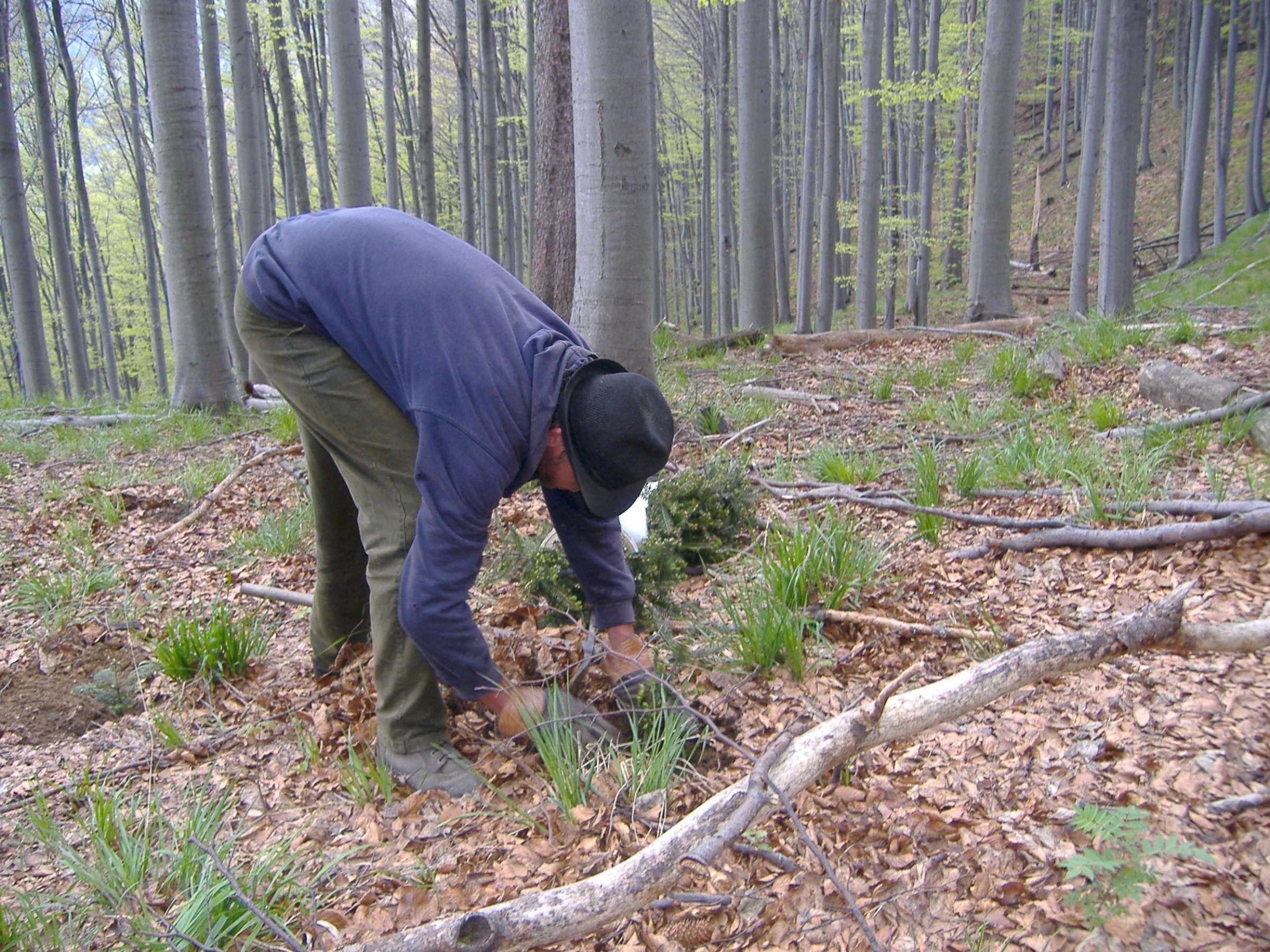 6 000 stromů z eshopu