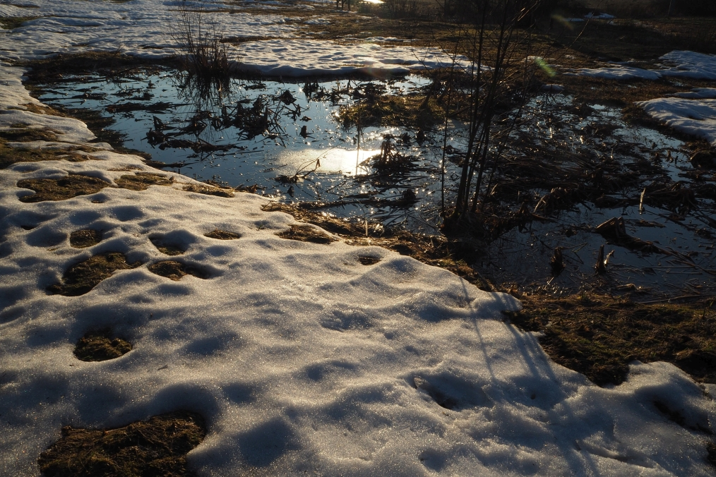 Juráška barevná i v zimě