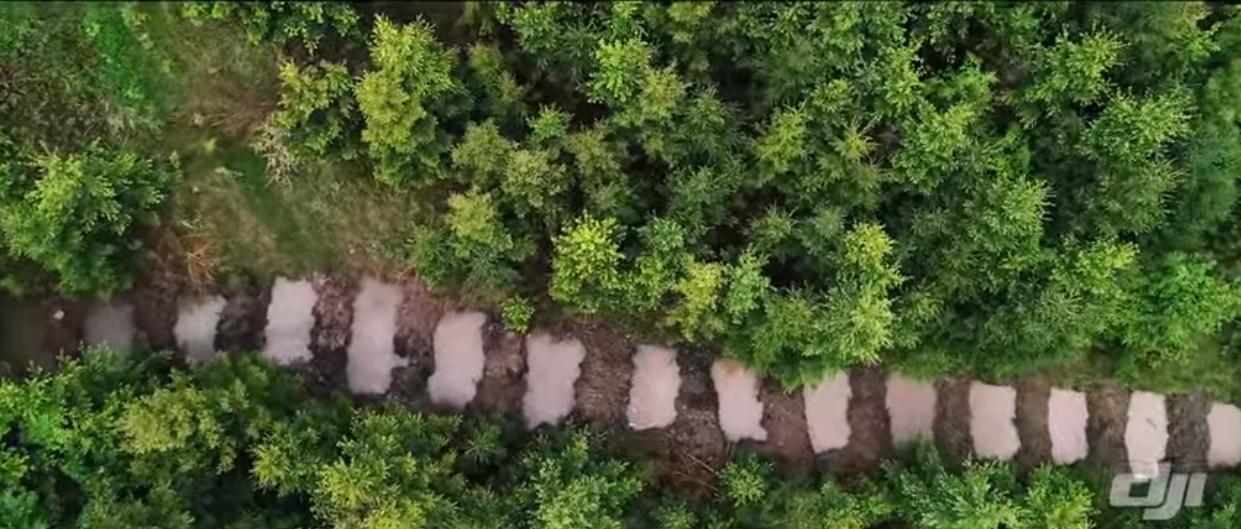 Voda pro lesy