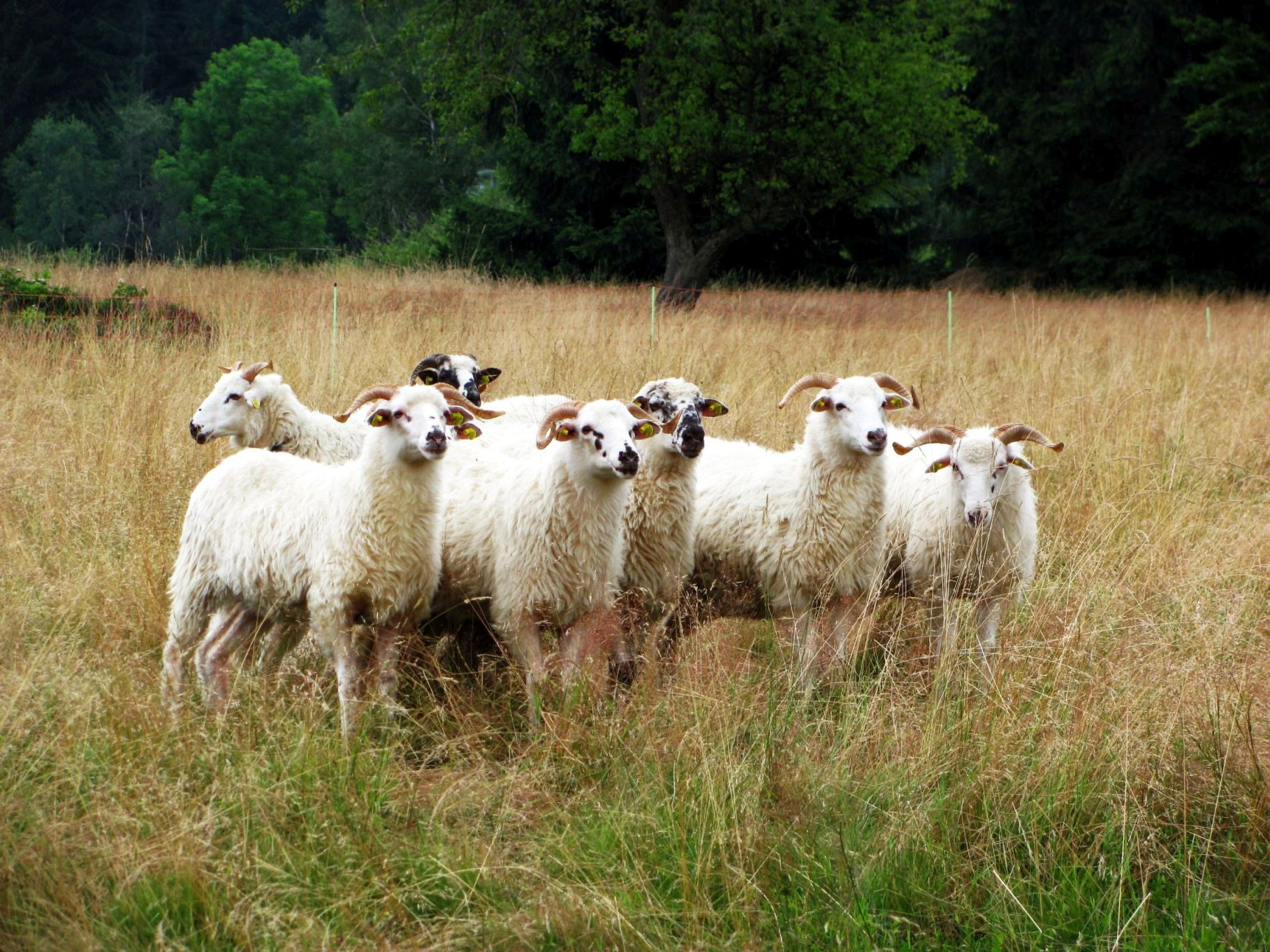 Pastviny pro modráska