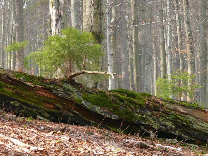 Pestré louky a lesy v Beskydech