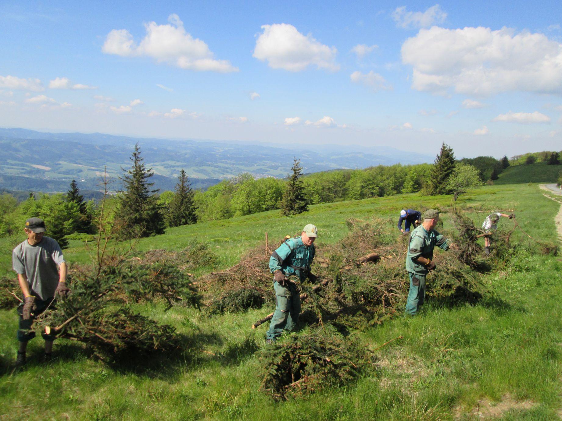 Záchrana smilkových trávníků v EVL Beskydy
